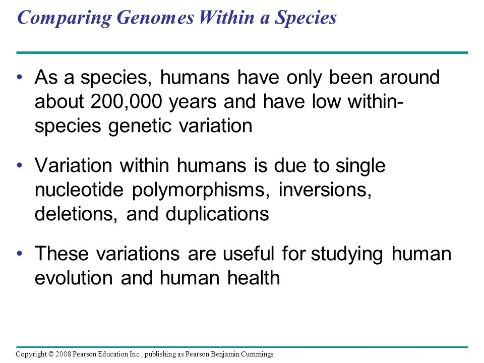 Copyright © 2008 Pearson Education Inc., publishing as Pearson Benjamin Cummings Comparing Genomes Within a Species As a species, humans have only bee