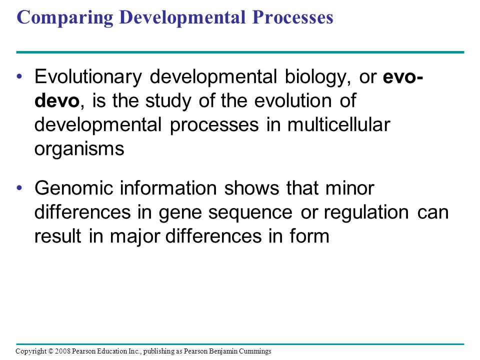 Copyright © 2008 Pearson Education Inc., publishing as Pearson Benjamin Cummings Comparing Developmental Processes Evolutionary developmental biology,