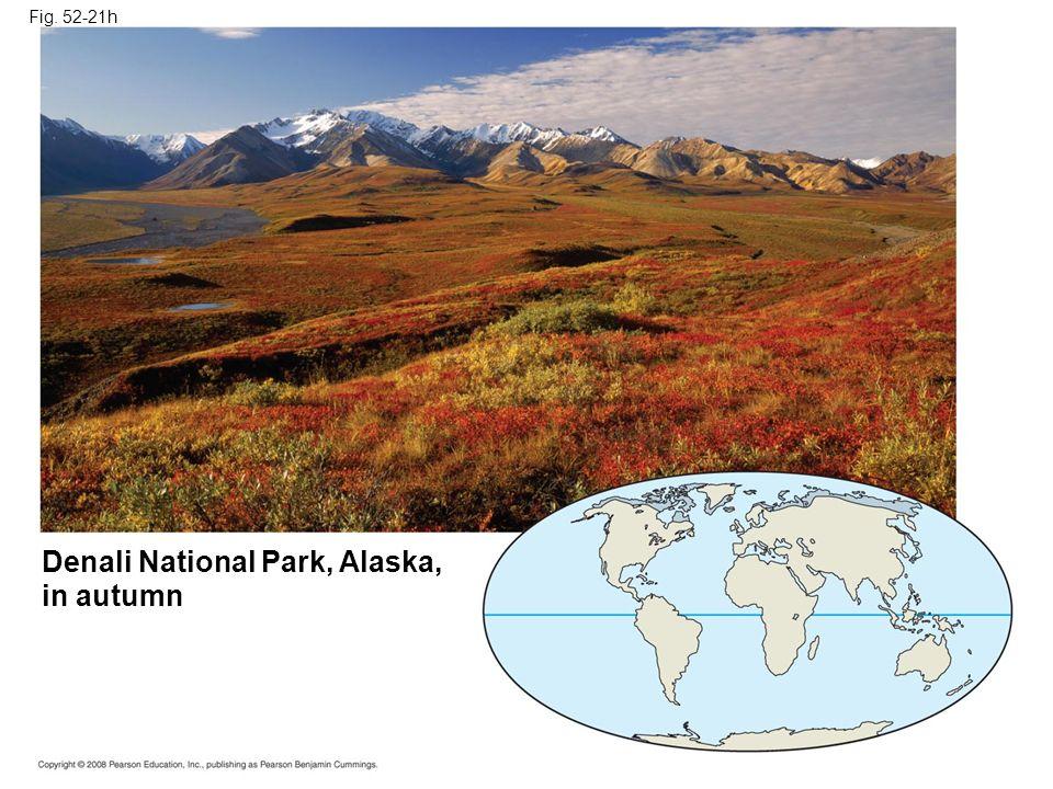 Fig. 52-21h Denali National Park, Alaska, in autumn