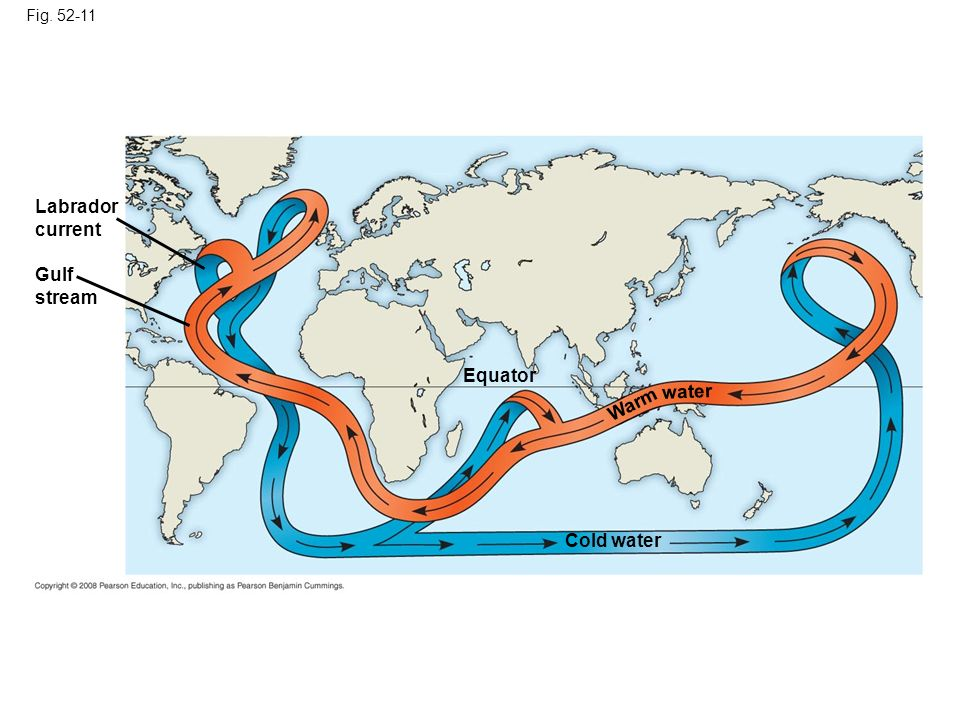 Fig. 52-11 Labrador current Gulf stream Equator Cold water Warm water