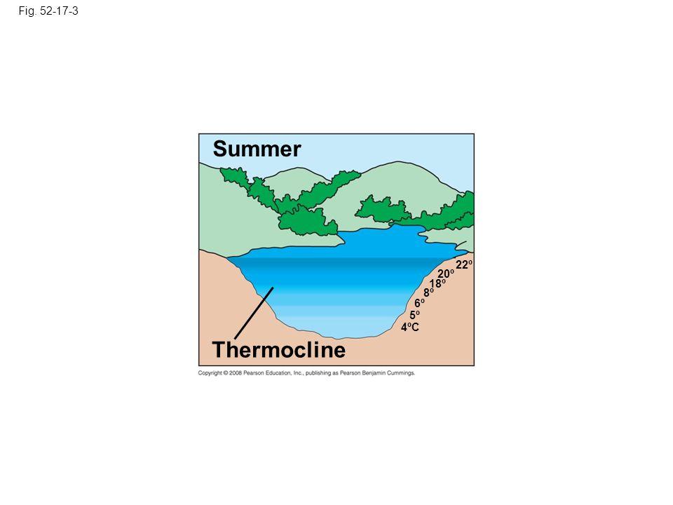 Fig. 52-17-3 Summer 8º 6º 5º 4ºC 18º 20º Thermocline 22º