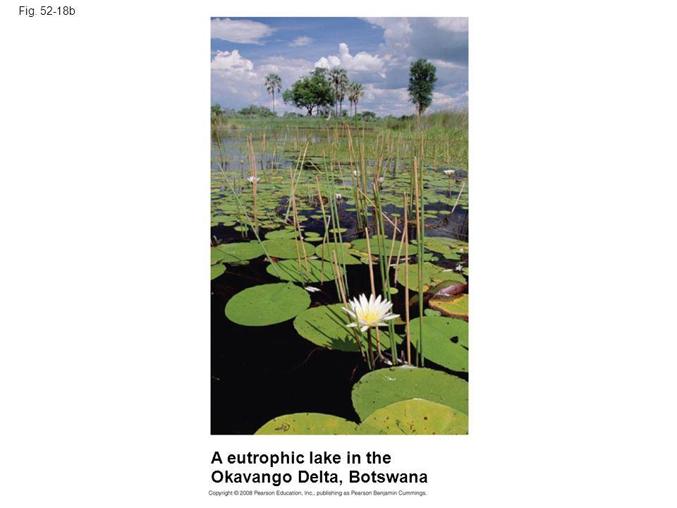 Fig. 52-18b A eutrophic lake in the Okavango Delta, Botswana