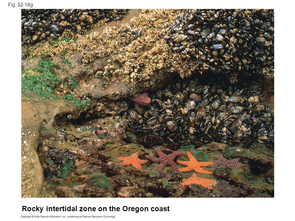 Fig. 52-18g Rocky intertidal zone on the Oregon coast