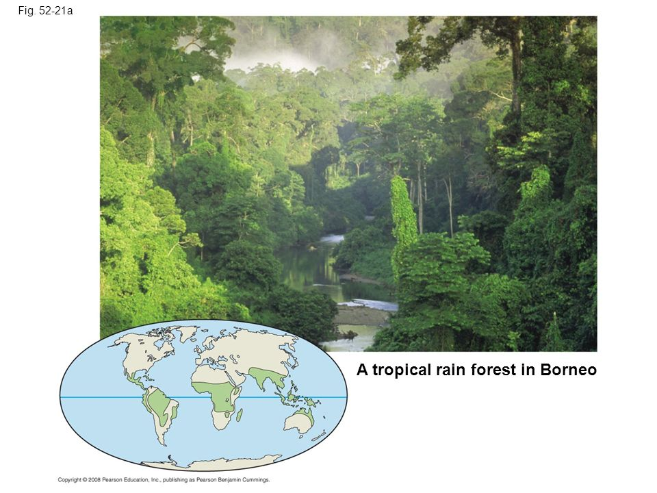 Fig. 52-21a A tropical rain forest in Borneo