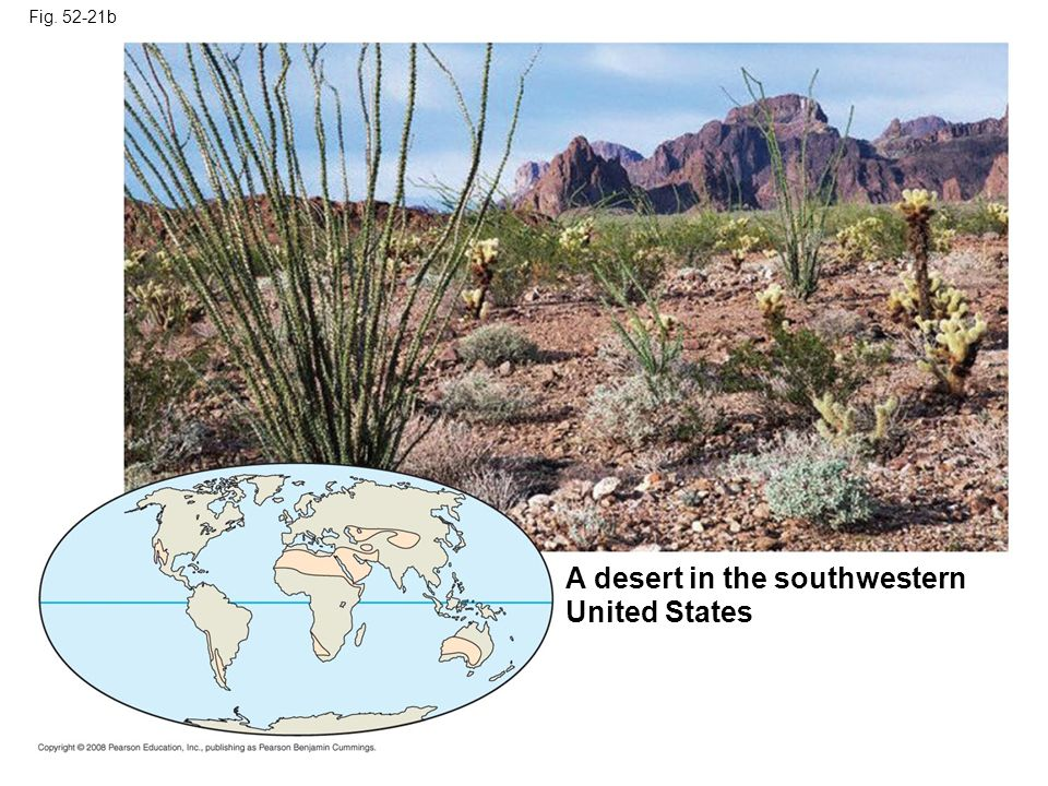Fig. 52-21b A desert in the southwestern United States