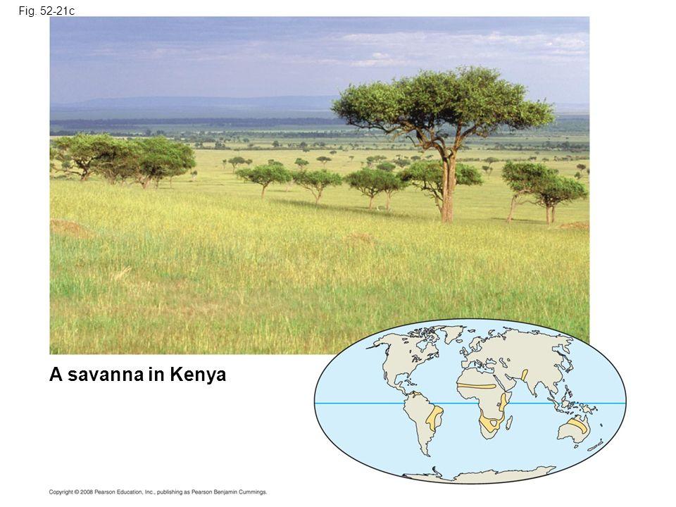 Fig. 52-21c A savanna in Kenya