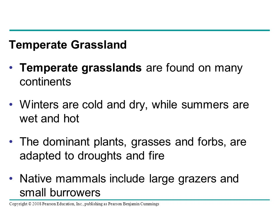 Copyright © 2008 Pearson Education, Inc., publishing as Pearson Benjamin Cummings Temperate Grassland Temperate grasslands are found on many continent