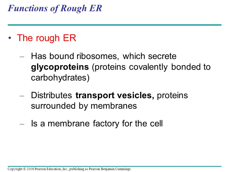 Functions of Rough ER The rough ER – Has bound ribosomes, which secrete glycoproteins (proteins covalently bonded to carbohydrates) – Distributes tran