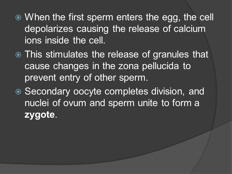 When the first sperm enters the egg, the cell depolarizes causing the release of calcium ions inside the cell. This stimulates the release of granules