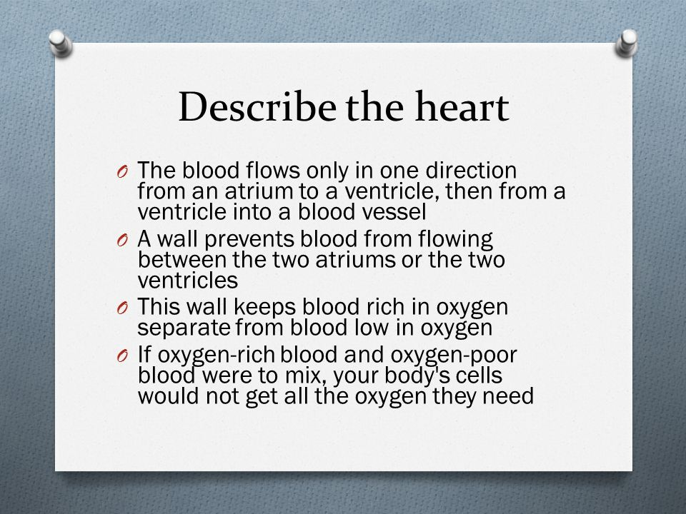 Describe the heart O The blood flows only in one direction from an atrium to a ventricle, then from a ventricle into a blood vessel O A wall prevents