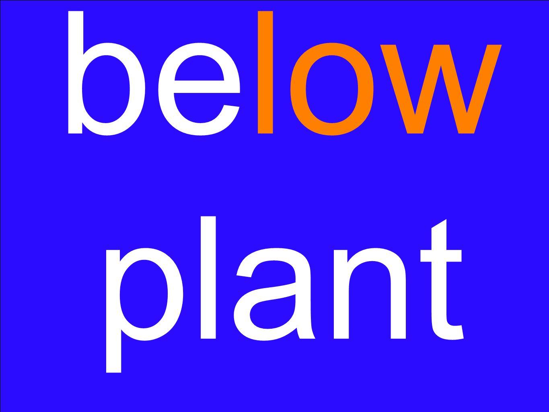 below plant