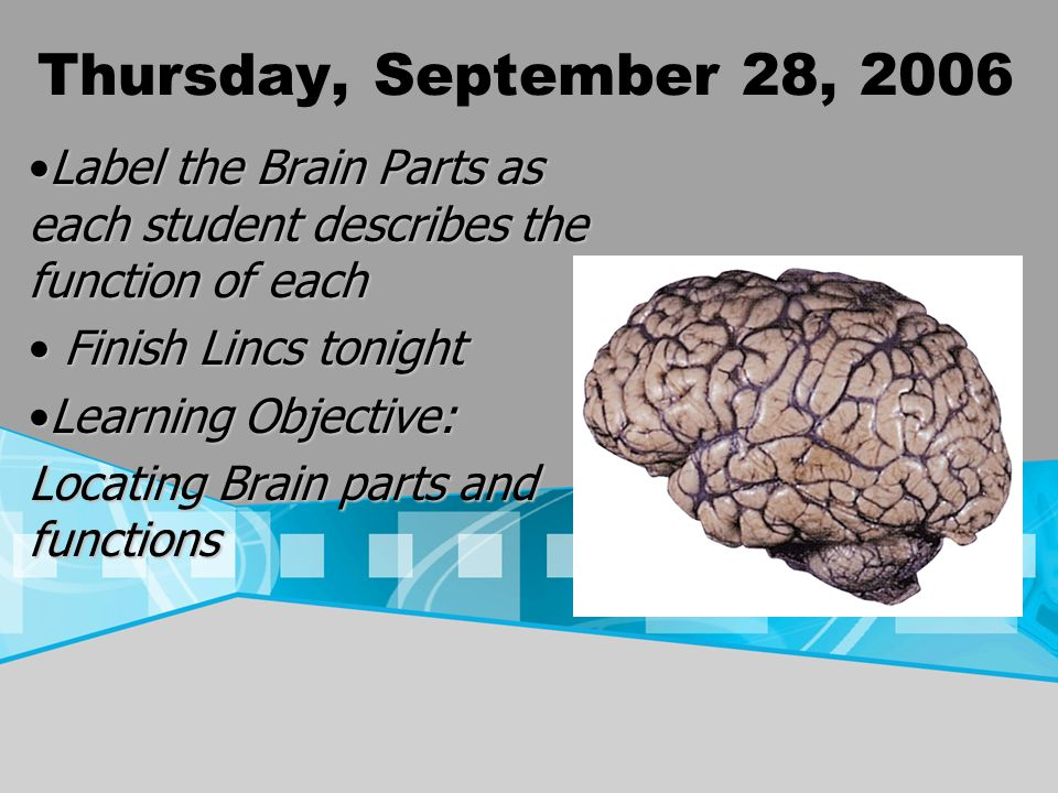 Thursday, September 28, 2006 Label the Brain Parts as each student describes the function of eachLabel the Brain Parts as each student describes the f