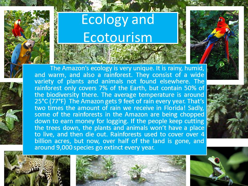 Ecology and Ecotourism The Amazons ecology is very unique. It is rainy, humid, and warm, and also a rainforest. They consist of a wide variety of plan
