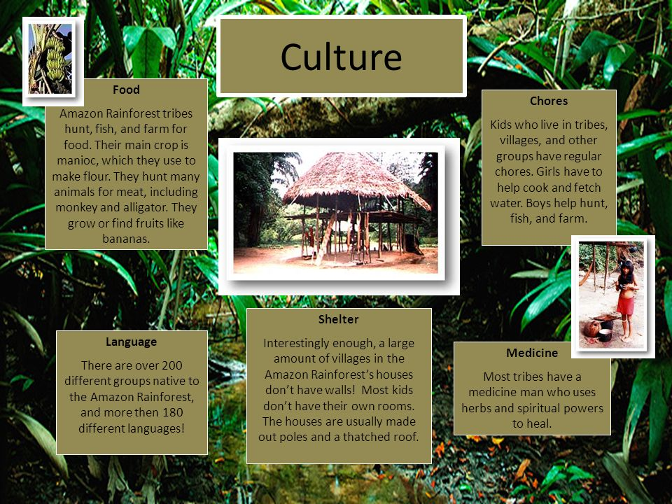 Culture Language There are over 200 different groups native to the Amazon Rainforest, and more then 180 different languages! Chores Kids who live in t