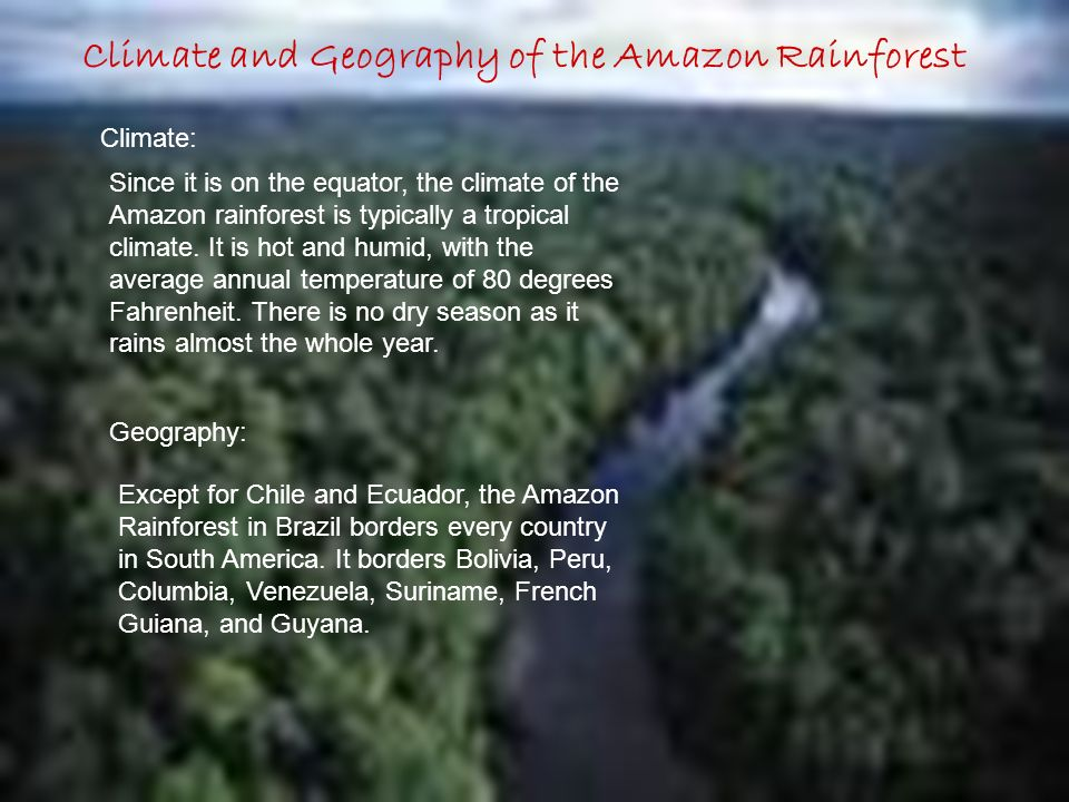 Climate and Geography of the Amazon Rainforest Climate: Since it is on the equator, the climate of the Amazon rainforest is typically a tropical climate.