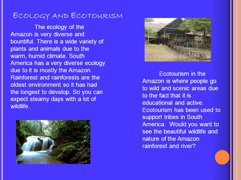 Plants and Animals Two thirds of the worlds species of plants are found in the Amazon Rainforest.