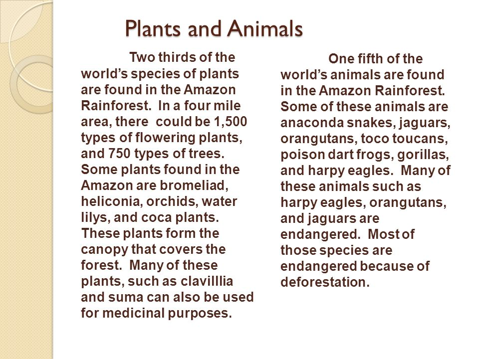 Plants and Animals Two thirds of the worlds species of plants are found in the Amazon Rainforest. In a four mile area, there could be 1,500 types of f