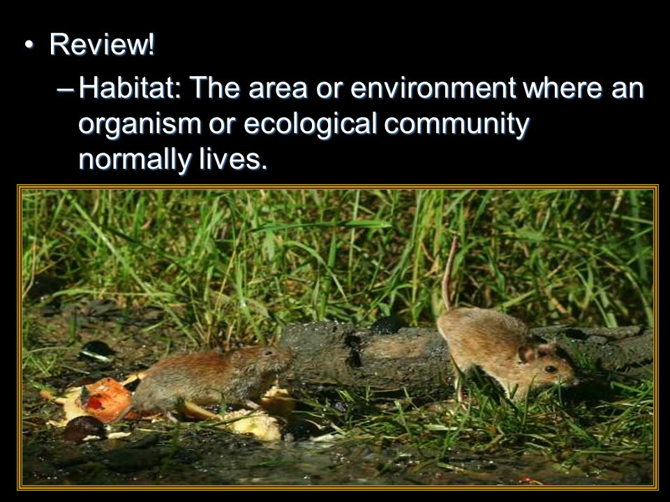 Review!Review! –Habitat: The area or environment where an organism or ecological community normally lives.
