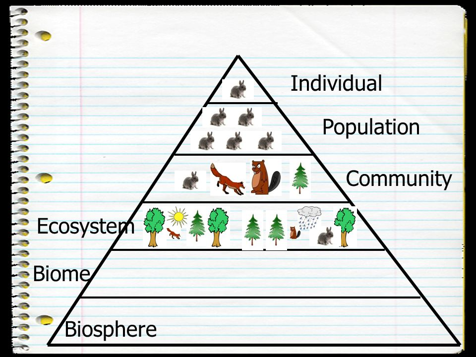 Individual Population Community Ecosystem Biome Biosphere
