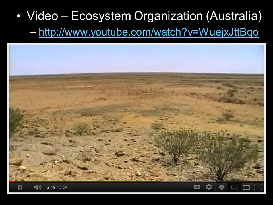 Video – Ecosystem Organization (Australia) –http://www.youtube.com/watch?v=WuejxJttBqohttp://www.youtube.com/watch?v=WuejxJttBqo