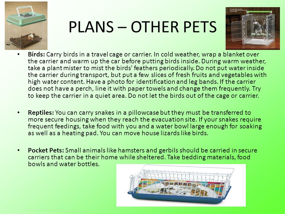 PLANS – OTHER PETS Birds: Carry birds in a travel cage or carrier.