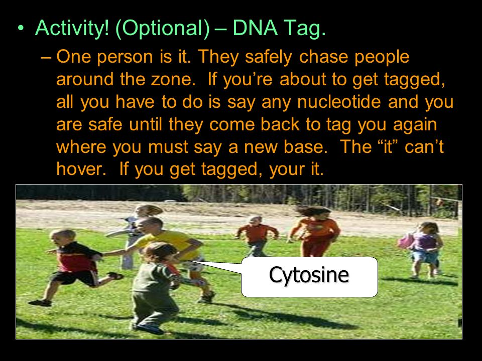 Activity. (Optional) – DNA Tag. –One person is it.