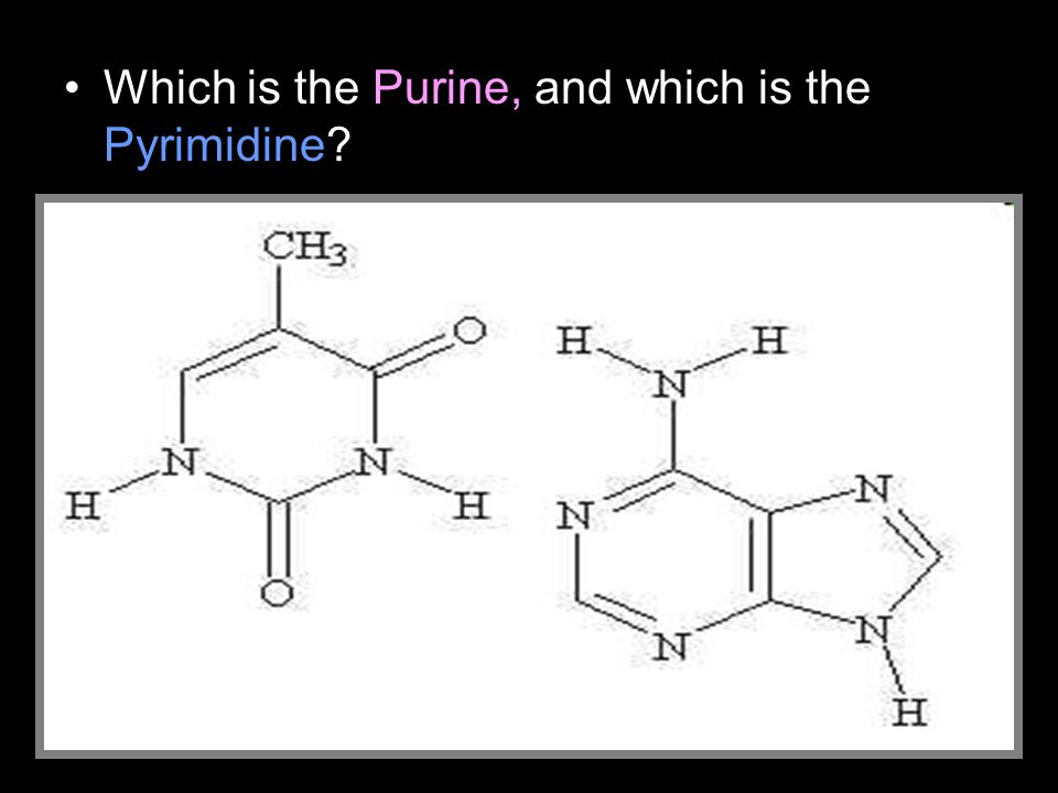 Which is the Purine, and which is the Pyrimidine