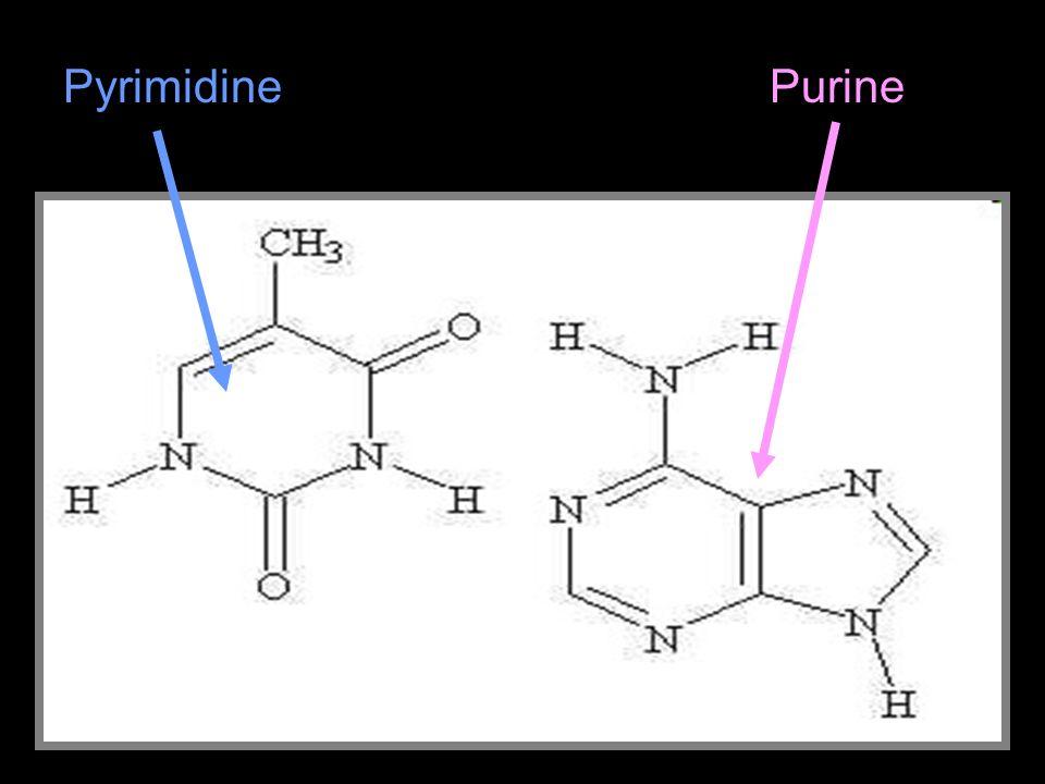 Pyrimidine Purine