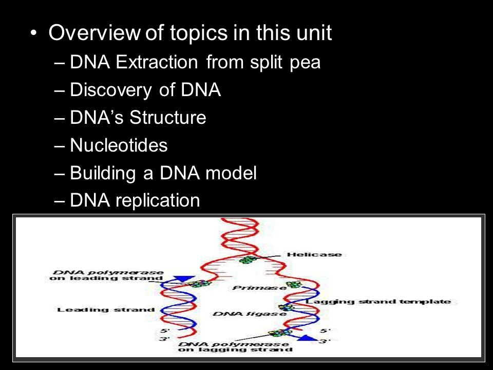Overview of topics in this unit –DNA Extraction from split pea –Discovery of DNA –DNAs Structure –Nucleotides –Building a DNA model –DNA replication –Cell Division –Chromosomes –Phases of Mitosis