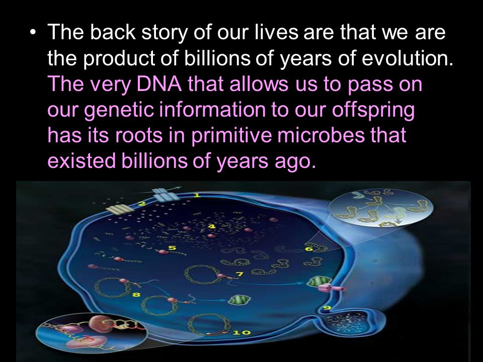 The back story of our lives are that we are the product of billions of years of evolution.