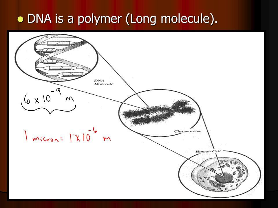 DNA is a polymer (Long molecule). DNA is a polymer (Long molecule).