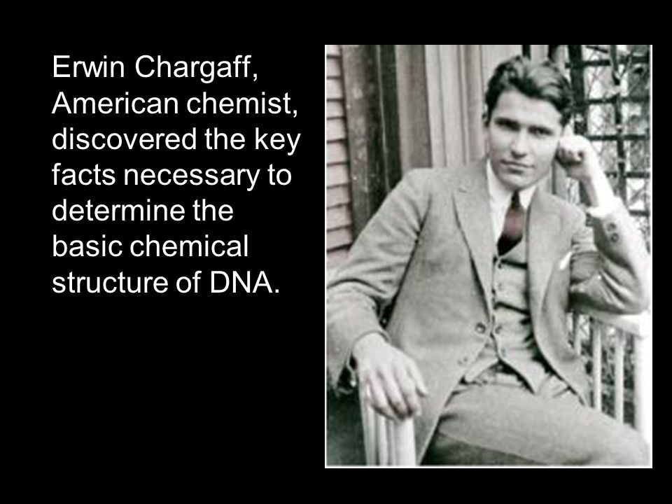 Erwin Chargaff, American chemist, discovered the key facts necessary to determine the basic chemical structure of DNA.