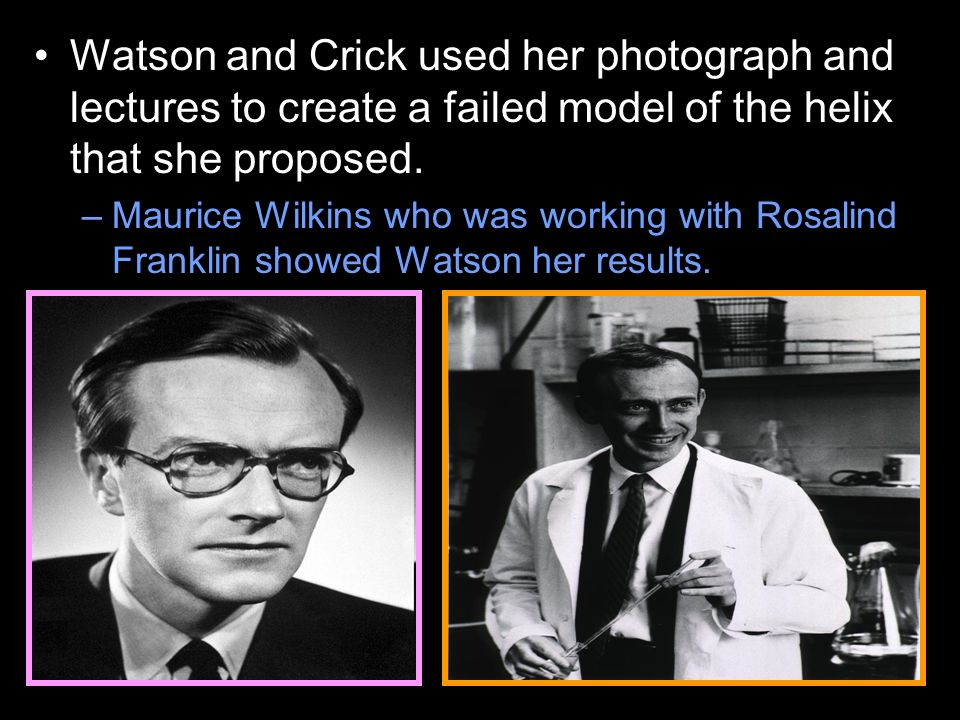 –Maurice Wilkins who was working with Rosalind Franklin showed Watson her results.