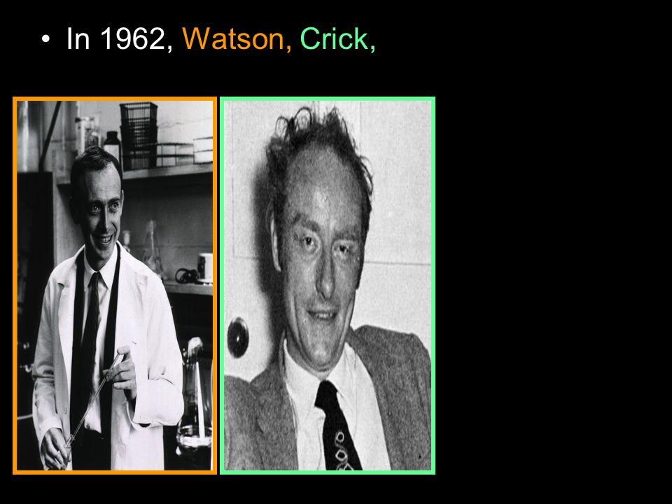 In 1962, Watson, Crick,