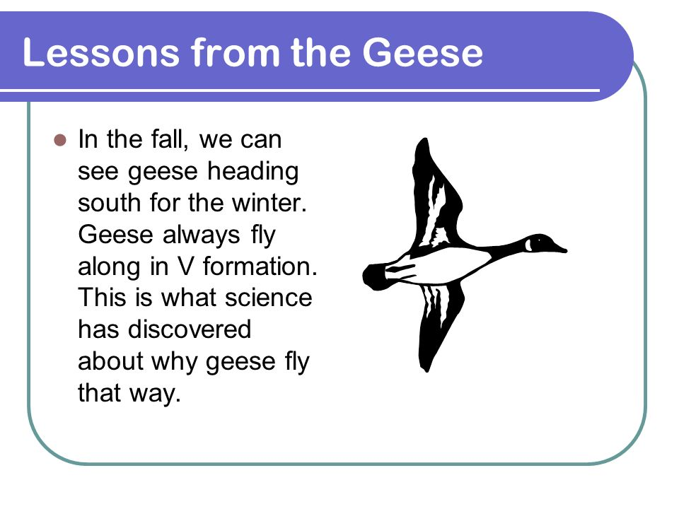 In the fall, we can see geese heading south for the winter. Geese always fly along in V formation. This is what science has discovered about why geese