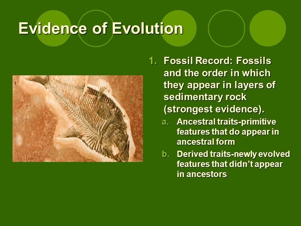 Evidence of Evolution 1.Fossil Record: Fossils and the order in which they appear in layers of sedimentary rock (strongest evidence). a.Ancestral trai