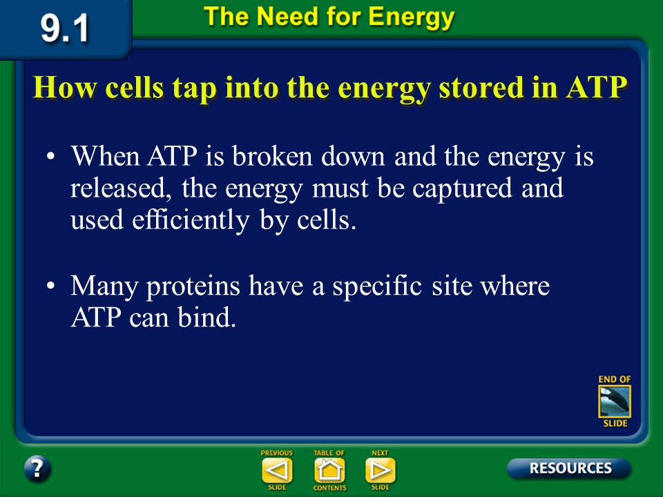 Section 9.1 Summary – pages 221-224 The energy of ATP becomes available to a cell when the molecule is broken down. Adenosine PPP P P PP Adenosine tri