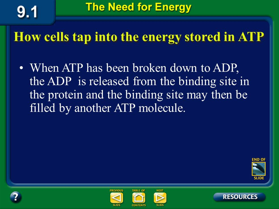 Section 9.1 Summary – pages 221-224 Then, when the phosphate bond is broken and the energy released, the cell can use the energy for activities such as making a protein or transporting molecules through the plasma membrane.