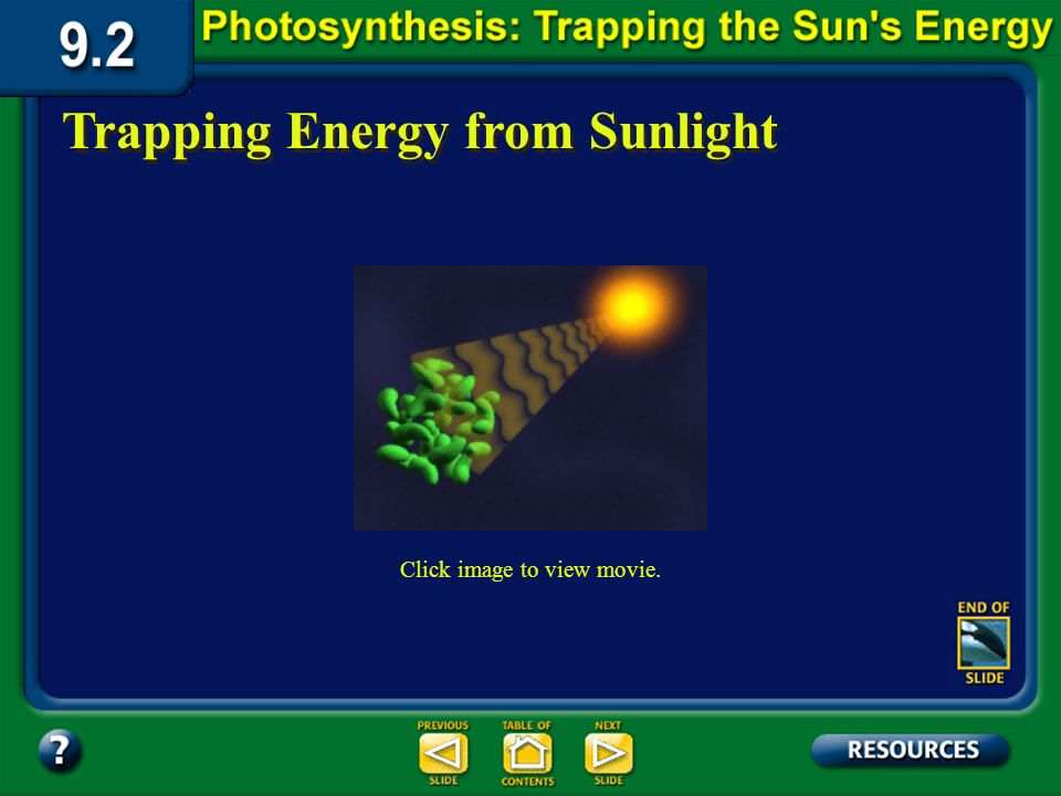 1.The light-dependent reactions convert light energy into chemical energy. Section 9.2 Summary – pages 225-230 Photosynthesis happens in two phases. 2