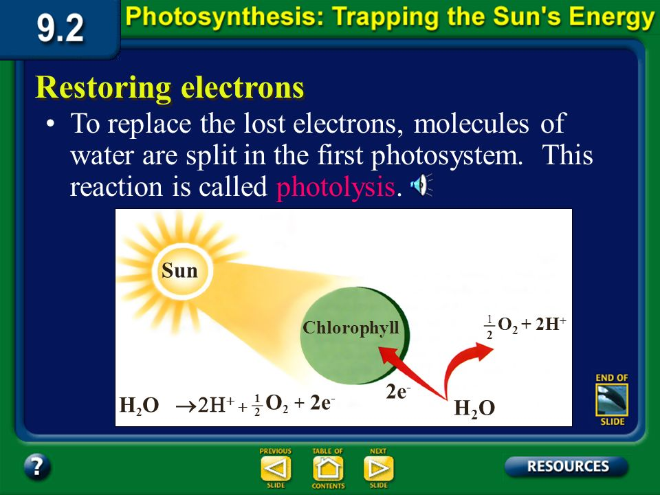 Section 9.2 Summary – pages 225-230 The electrons are transferred to the stroma of the chloroplast.