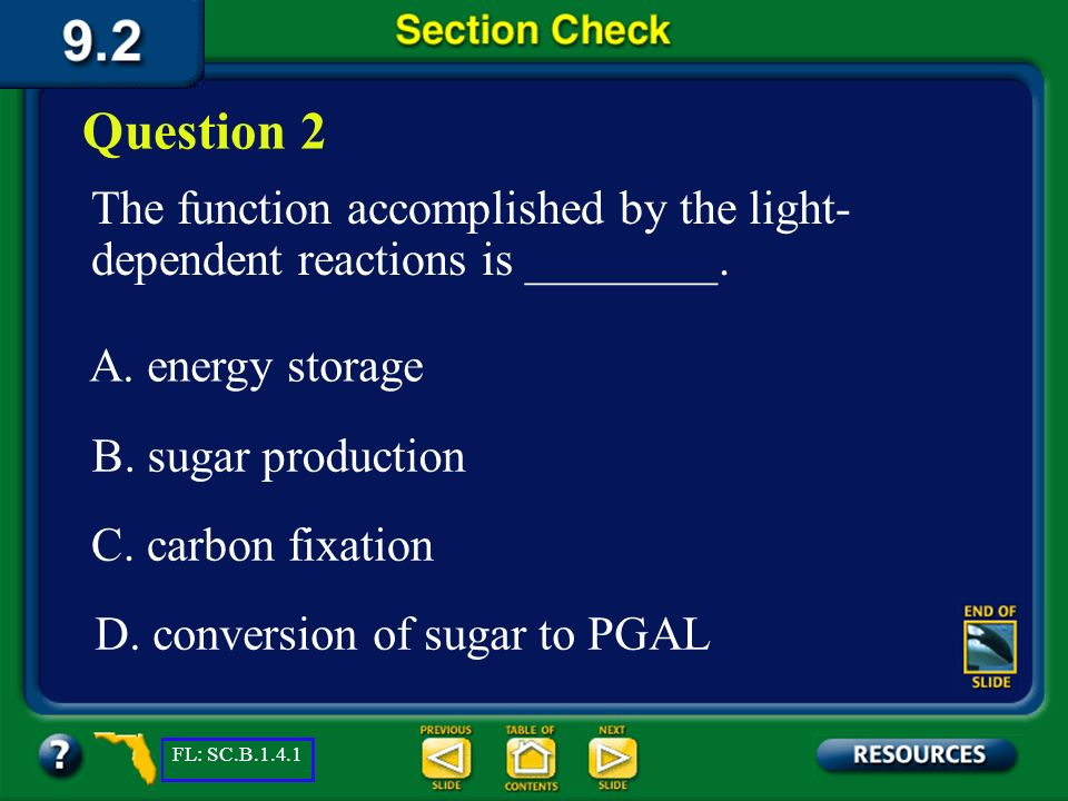 Section 2 Check The answer is C. Photosynthesis happens in two phases to make simple sugars and convert the sugars into complex carbohydrates for ener