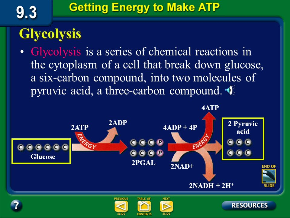 Section 9.3 Summary – pages 231-237 Cellular Respiration The first stage, glycolysis, is anaerobicno oxygen is required.
