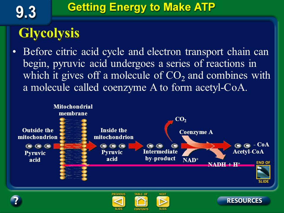 Section 9.3 Summary – pages 231-237 Glycolysis is not very effective, producing only two ATP molecules for each glucose molecule broken down.
