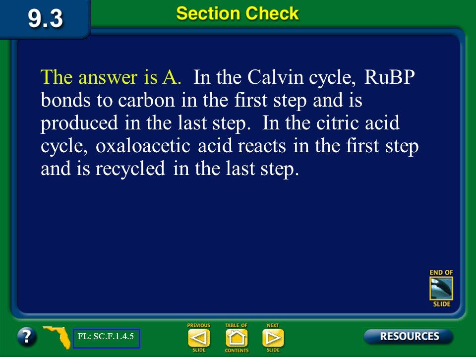 Section 3 Check What do the Calvin cycle and the Citric acid cycle have in common.