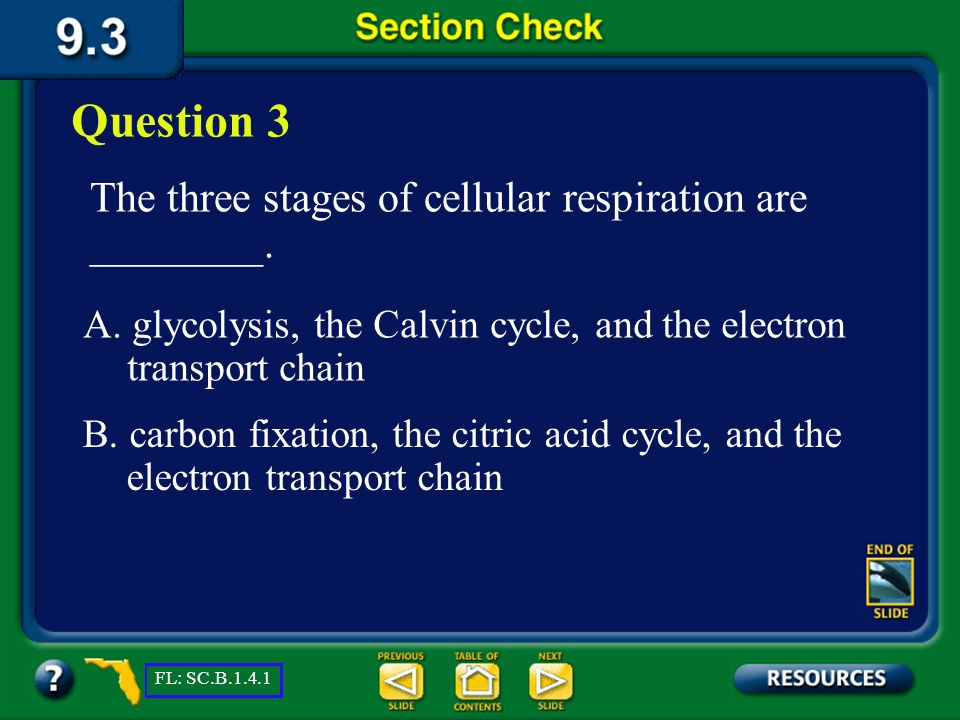 Section 3 Check The answer is B. Photosynthesis, light- independent reactions, and the Calvin cycle all occur in plants. FL: SC.B.1.4.1, SC.F.1.4.5