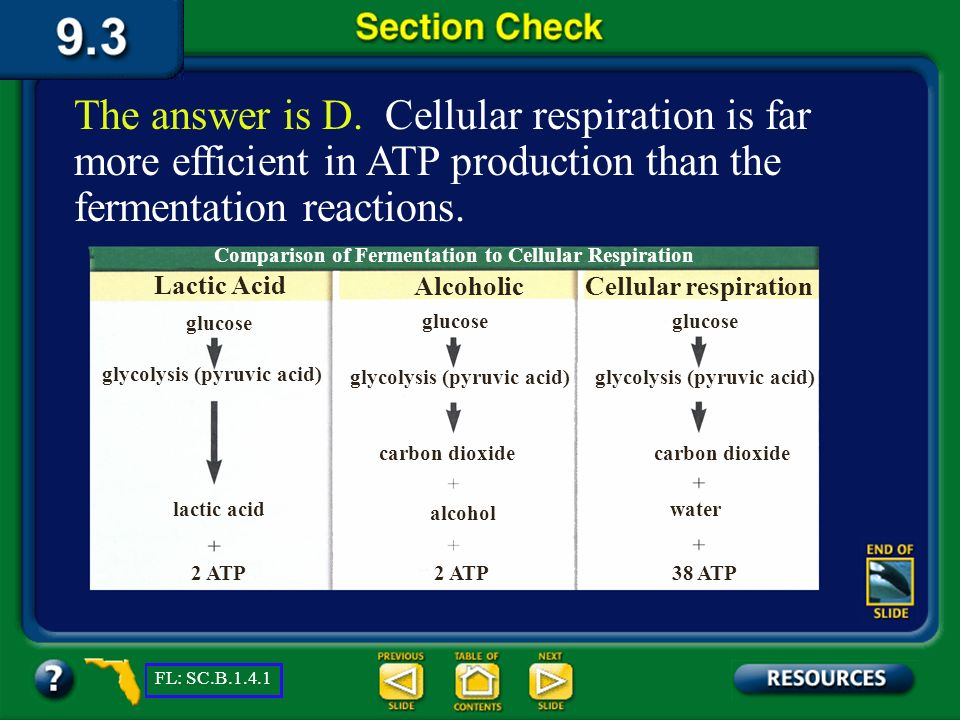 Section 3 Check Which of the following yields the greatest net ATP? Question 4 D. Cellular respiration C. Calvin cycle B. Alcoholic fermentation A. La