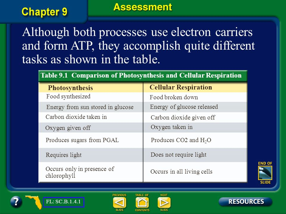 Chapter Assessment Question 1 Name two differences between photosynthesis and cellular respiration. FL: SC.B.1.4.1