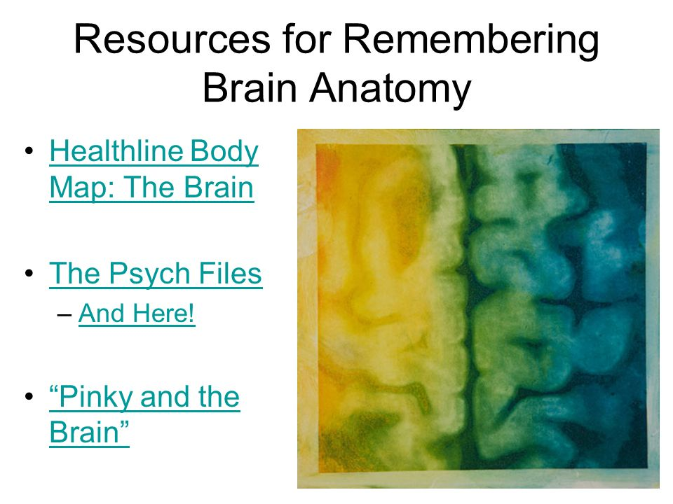 Resources for Remembering Brain Anatomy Healthline Body Map: The BrainHealthline Body Map: The Brain The Psych Files –And Here!And Here! Pinky and the