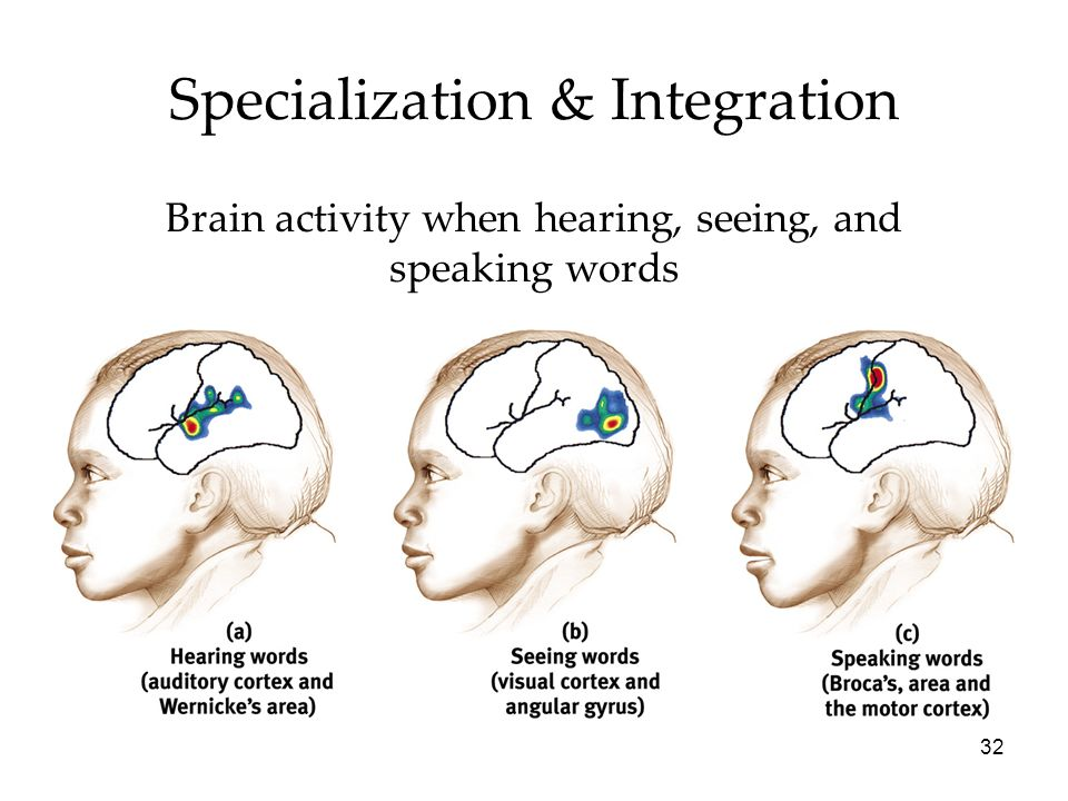 32 Specialization & Integration Brain activity when hearing, seeing, and speaking words