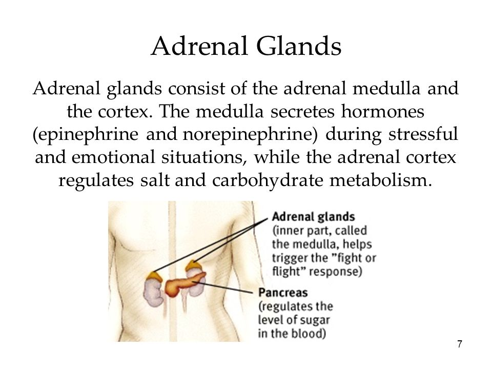 7 Adrenal Glands Adrenal glands consist of the adrenal medulla and the cortex. The medulla secretes hormones (epinephrine and norepinephrine) during s